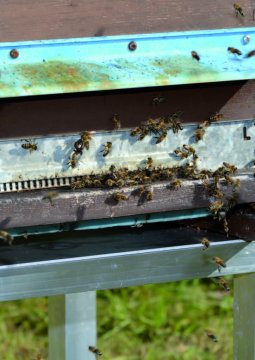 files/images/editions_2015_tobeeornottobee_abeilles_640x360.jpg